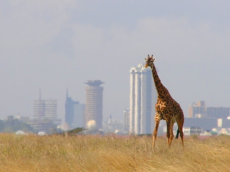 http://www.norvica.ru/files/uploaded/Giraffe_Nairobi.jpg