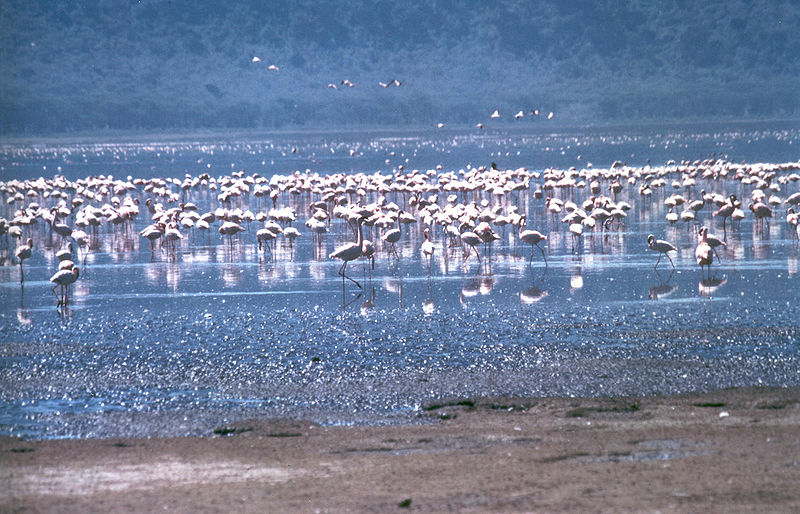 http://www.norvica.ru/files/uploaded/Nakuru_flamingos.jpg